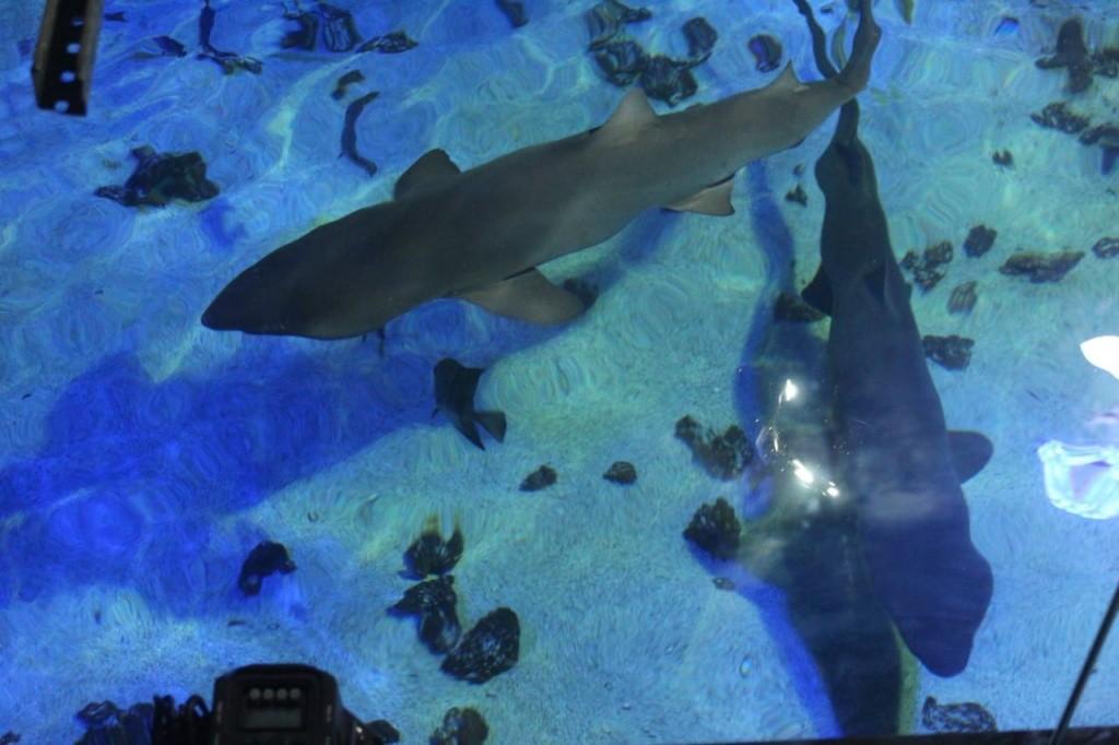 oceanic-aquarium-passarela-1